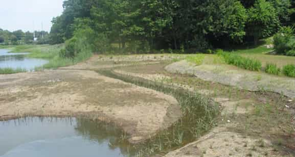 Salt marsh construction